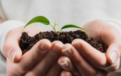 Politica de qualitat, medi ambient i seguretat alimentaria